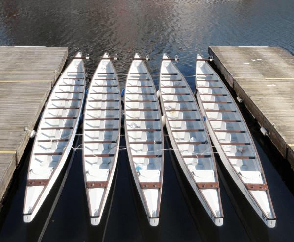Dragon Boats on False Creek Vancouver