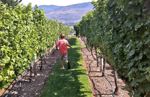 okanagan wineries with kids