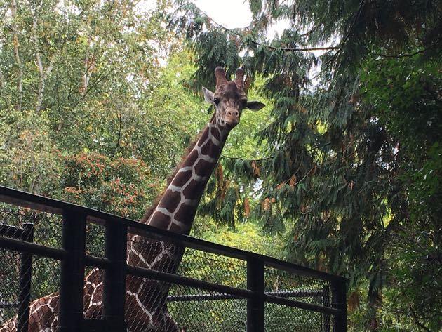 woodland-park-zoo