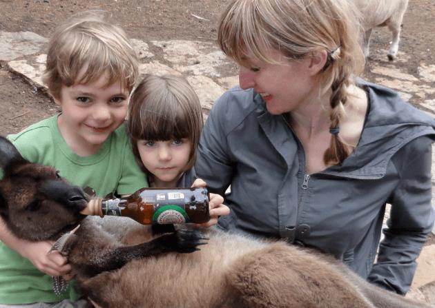 Kangaroo Feeding Kangaroo Island