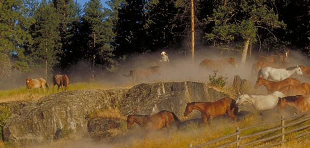 Dude Ranches BC