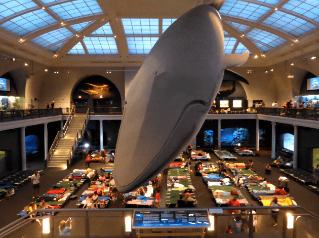 Sleepover Museum of Natural History New York
