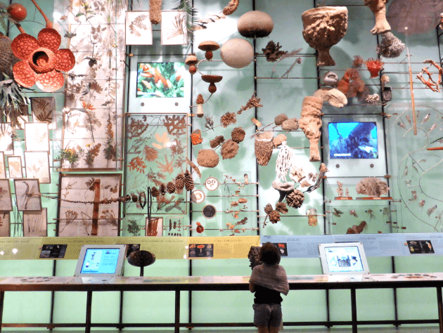 Kids Sleepover – American Museum of Natural History, New York