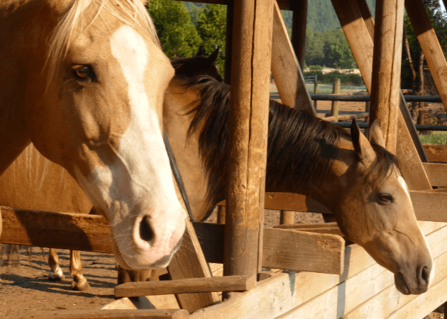 Horseback Riding Out n' About Treesort Oregon
