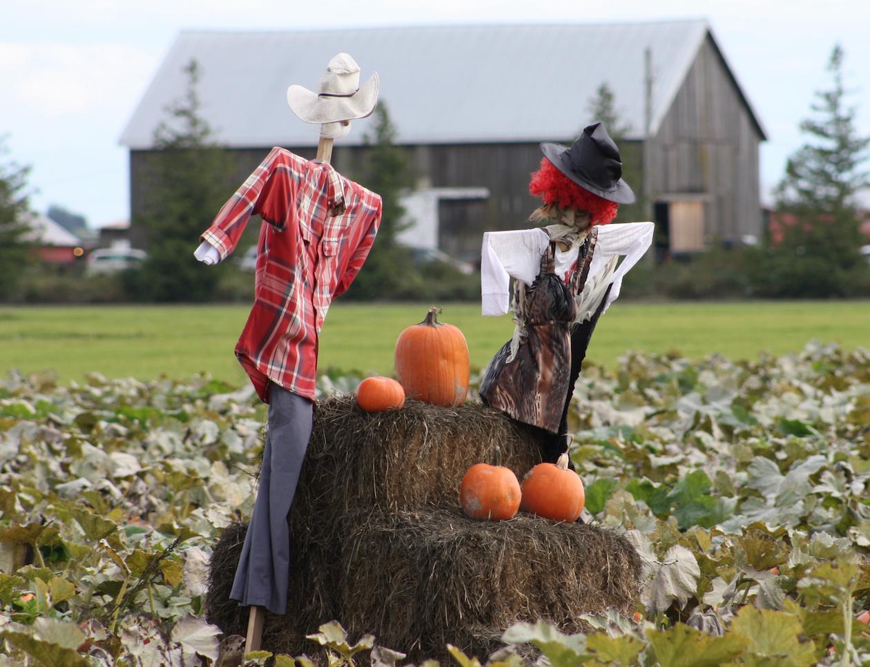 Pumpkin Patches Surrey, Richmond, Delta, Ladner