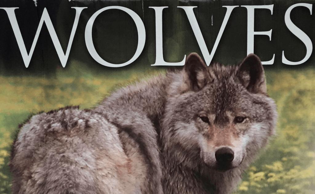 Wolf Refuge British Columbia