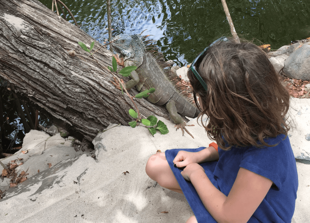 Crocodiles on La Ropa Beach