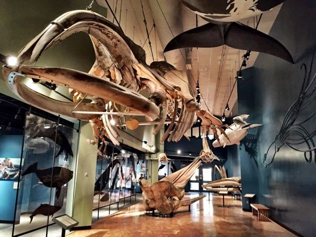Things to do in Saint John, New Brunswick – with Kids
