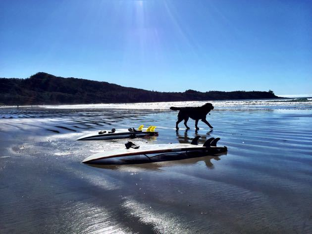 Dog Friendly Beaches Tofino