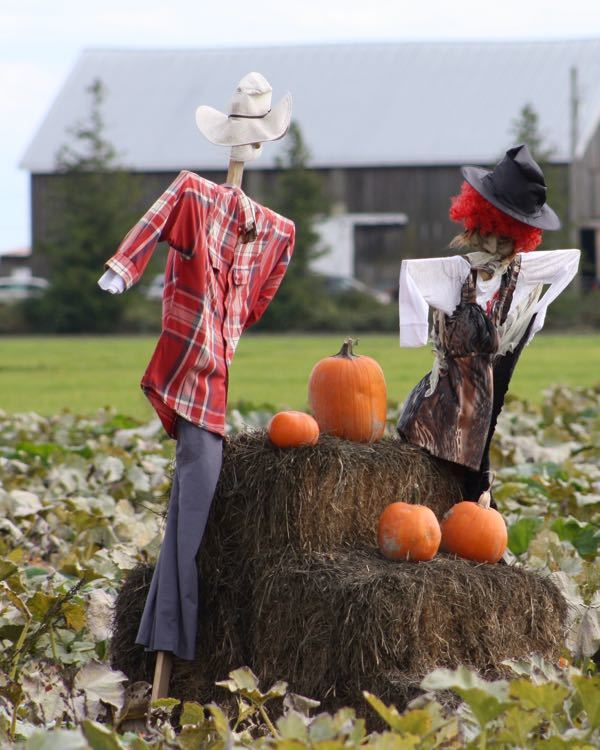 Pumpkin Patches – Vancouver and Lower Mainland 2017