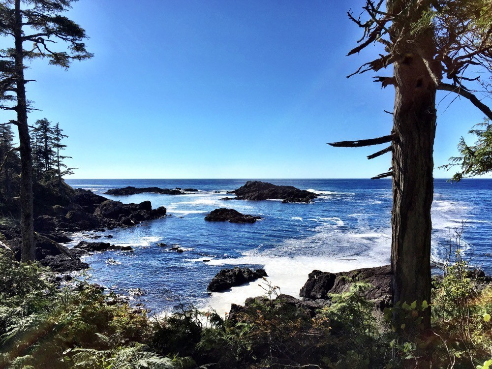 Ucluelet Hiking - Wild Pacific Trail