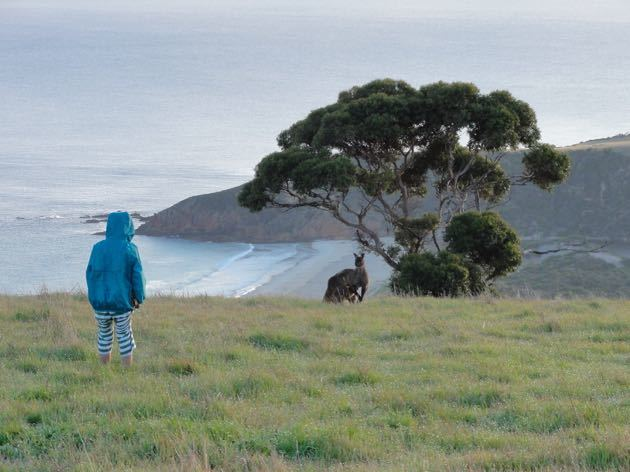 Kangaroo Island with Kids #SeeAustralia