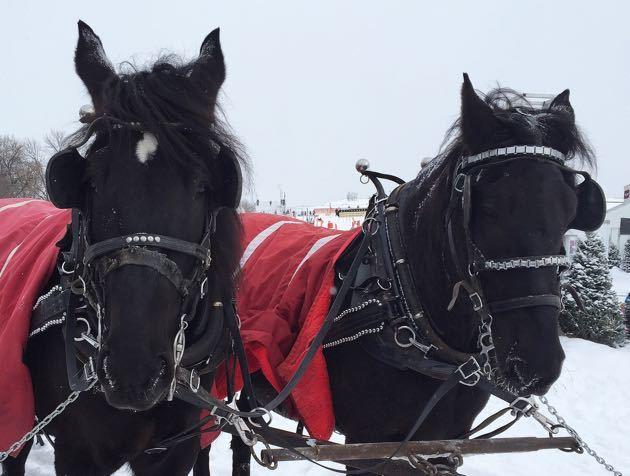 Horse Carriage Quebec