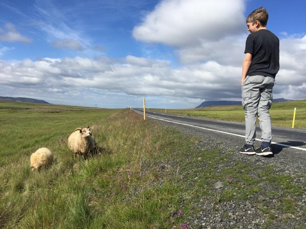 Wildlife Iceland