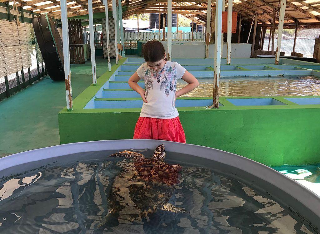 Bequia Turtle Sanctuary