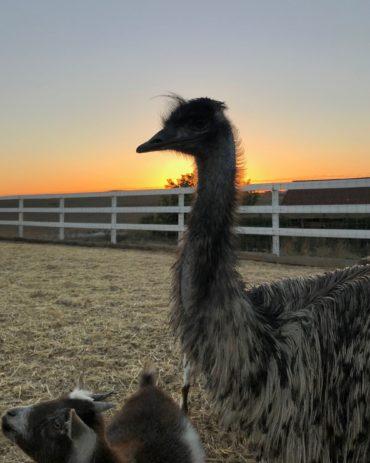 Farm Stay California – Our Petaluma Family Ranch Vacation