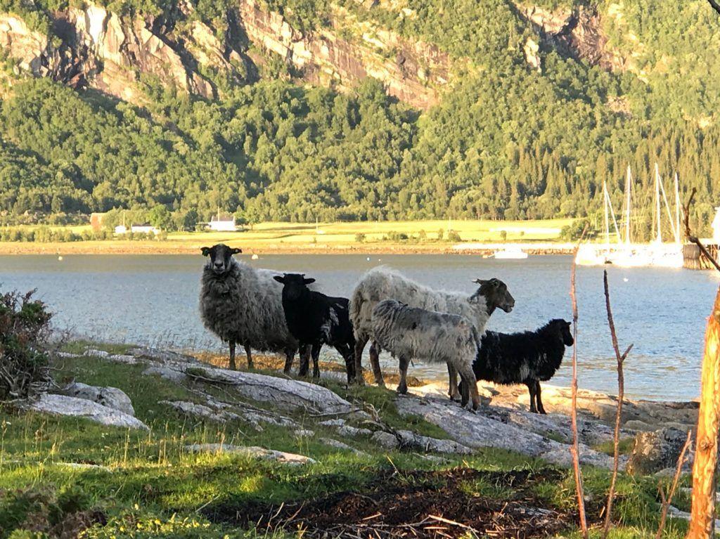 Manshausen Island Norway