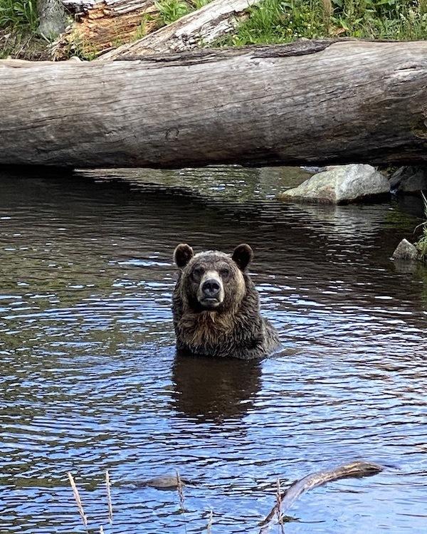 Visiting Bella Coola, B.C. in Bear Watching Season